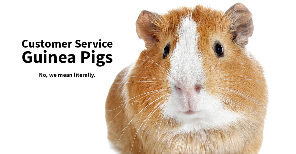 "A guinea pig on a white background. The words ""Customer service guinea pigs. No, we mean literally."" appear in black."